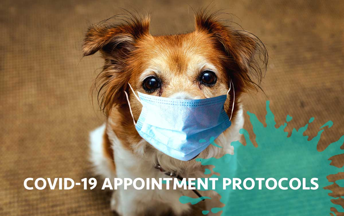 COVID-19 Appointment Protocols
